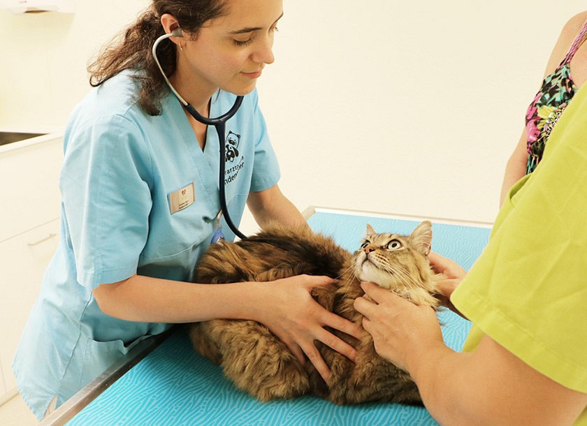 Tierarztpraxis Lindenacker GmbH