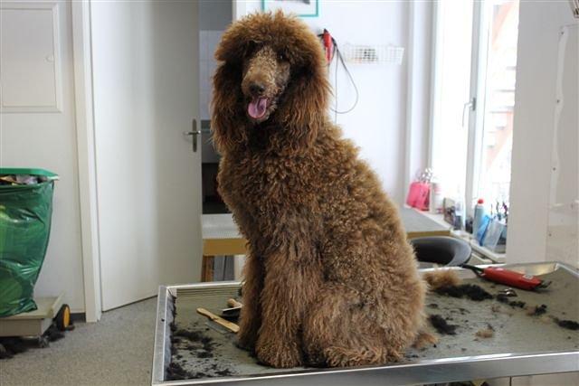 Hundesalon Dany