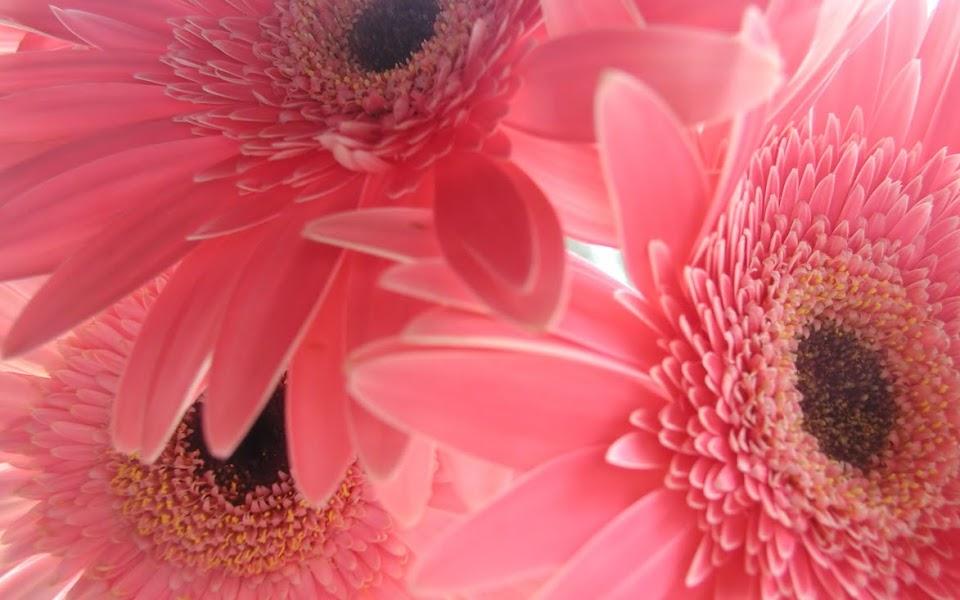 Lofendo Flowers