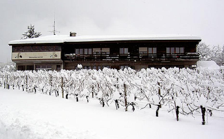 Weinbau und Rebschule Löw