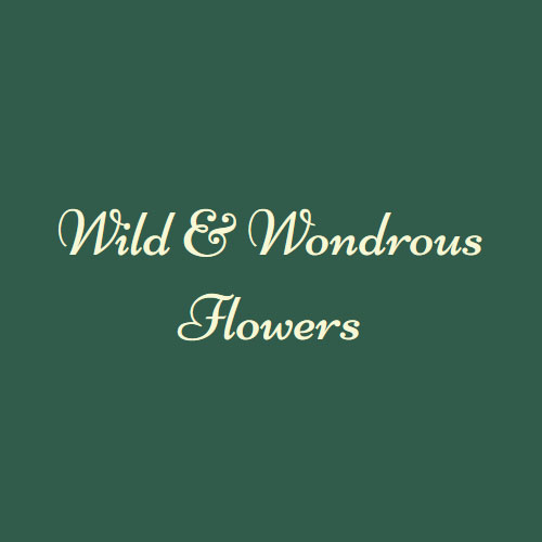 Wild & Wondrous Flowers