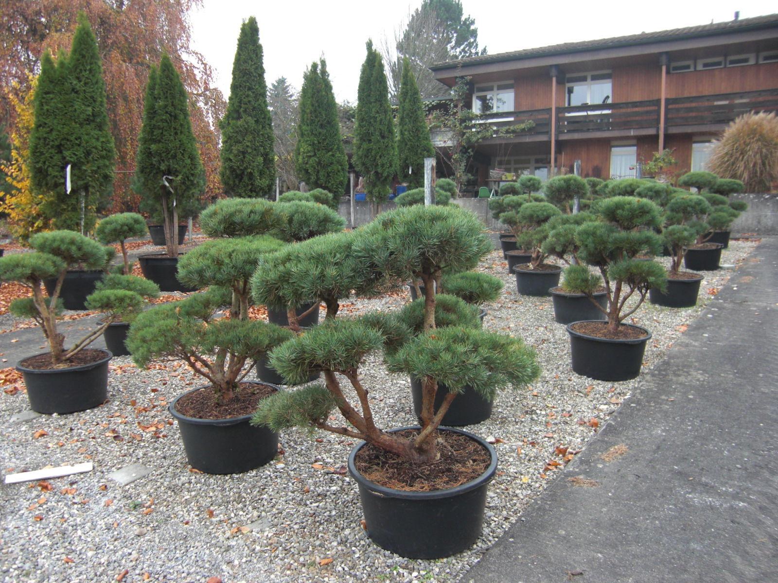 Hauenstein Pflanzen + Garten AG