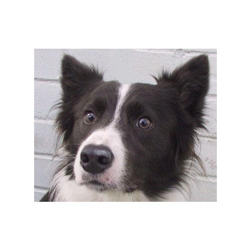 Abbeywood vets Ltd - Manchester, Lancashire M34 3JE - 01613 365062 | ShowMeLocal.com