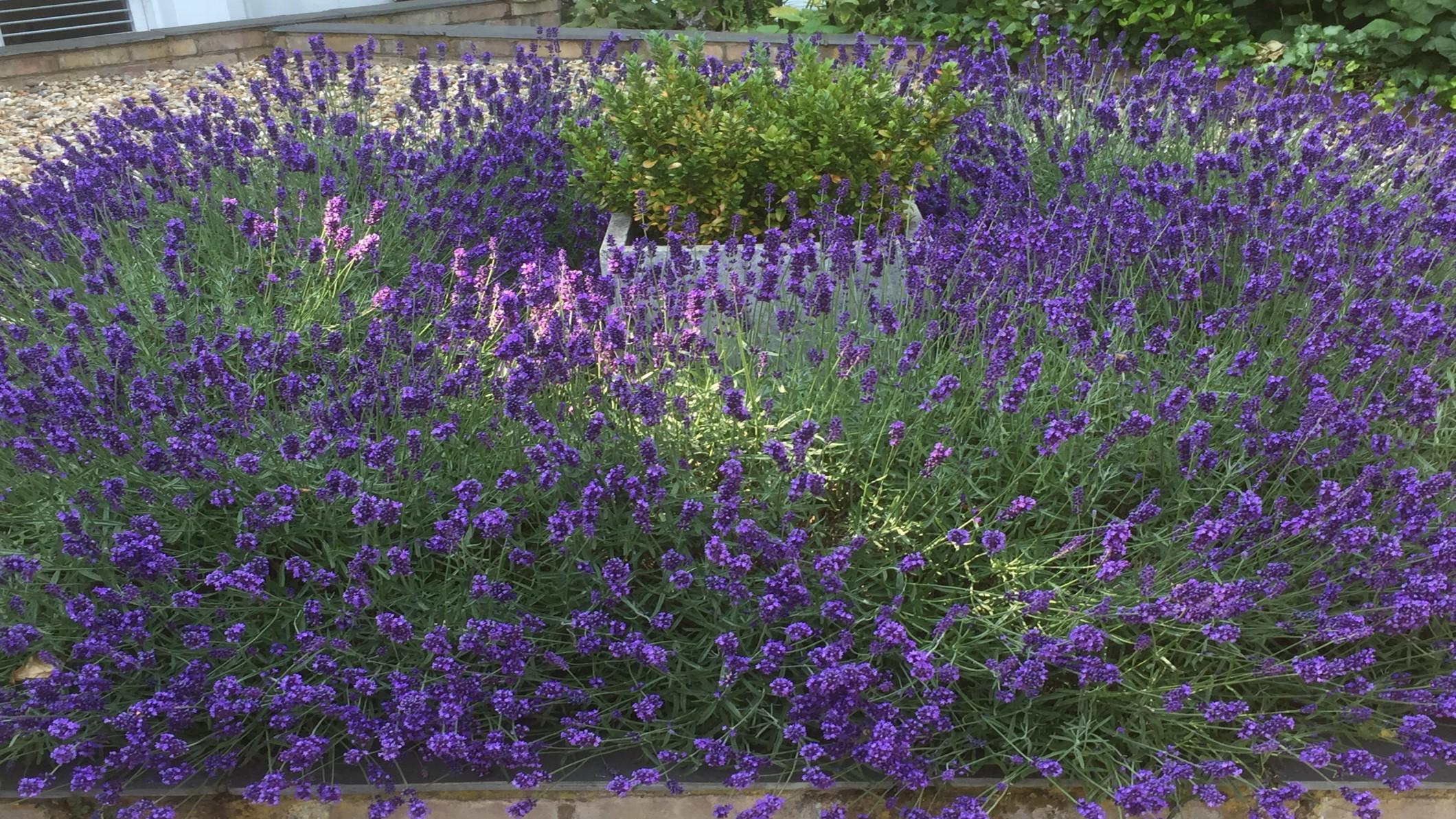 Garden City Plants & Gardening