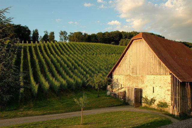 Weingut Klosterhof