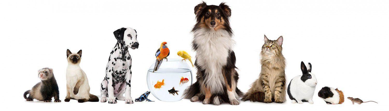 Tierarztpraxis am Tannenberg AG