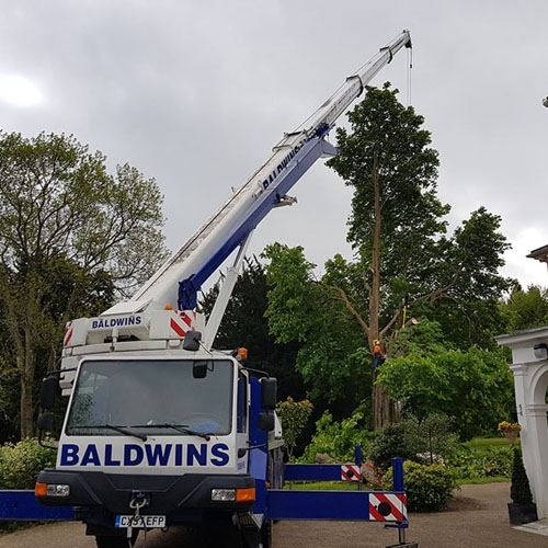 L.T.D Tree Surgeons Godalming & Surrey