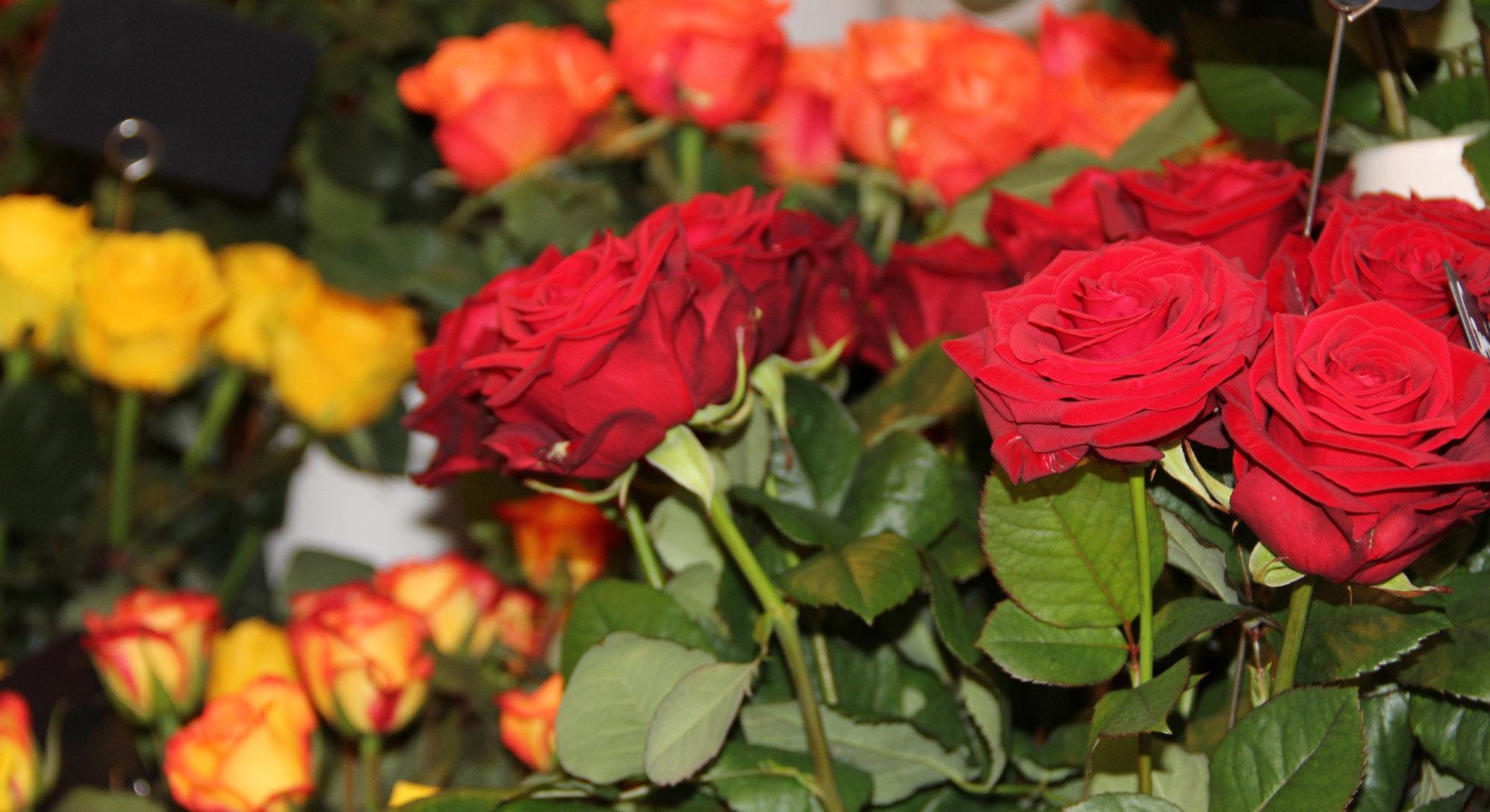 Blumen Belser
