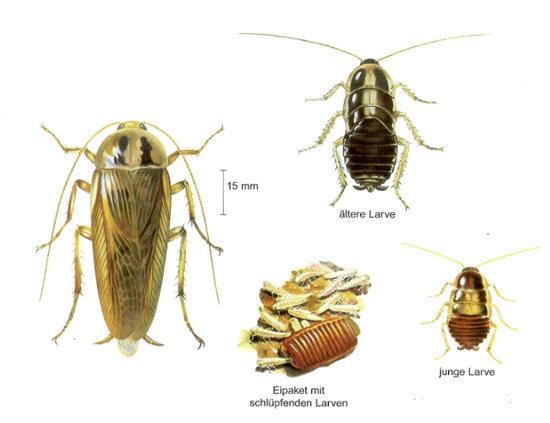 Insektol AG Pest Control