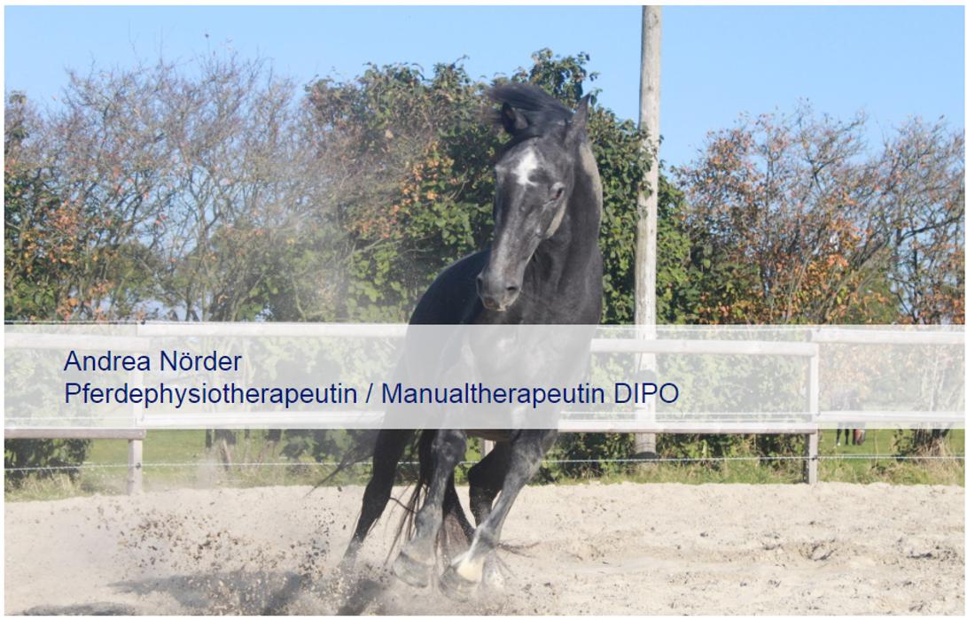 Bild zu Pferdephysio Andrea Nörder in Emden Stadt