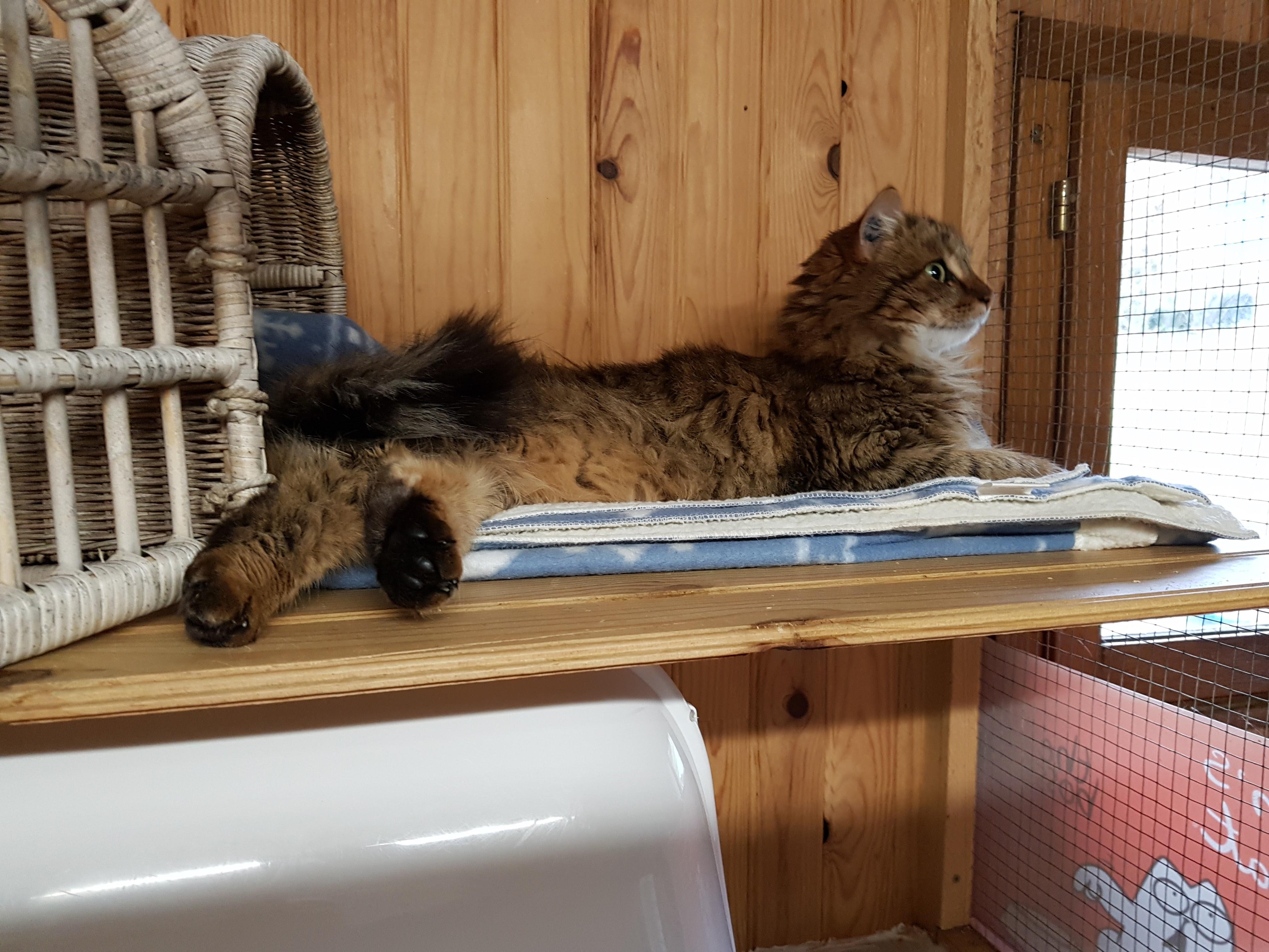 La maison des chats de Valérie
