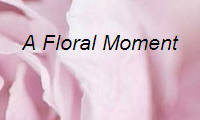 A Floral Moment