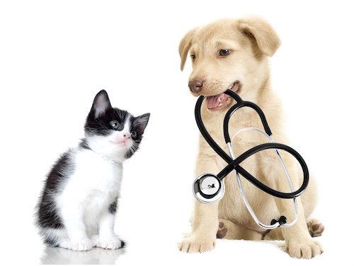 AIUTO Cabinet vétérinaire Sàrl
