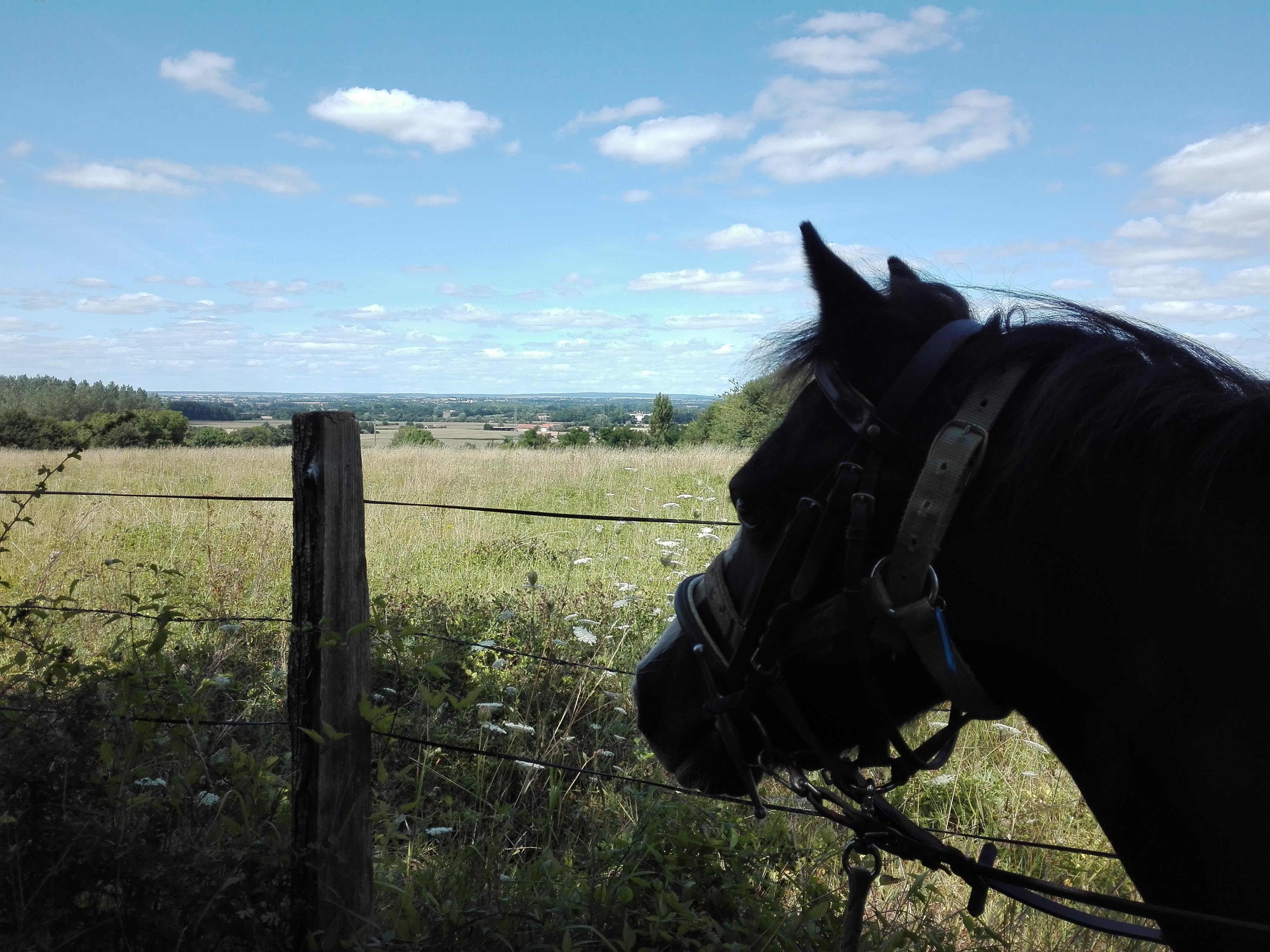 AUREL'HORSE