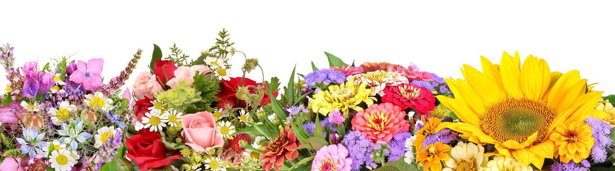 Blumen Edelweiss Hartmann Ursula