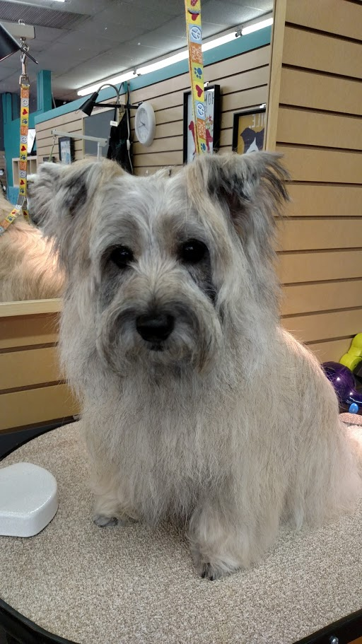 Dog Stars Grooming & More