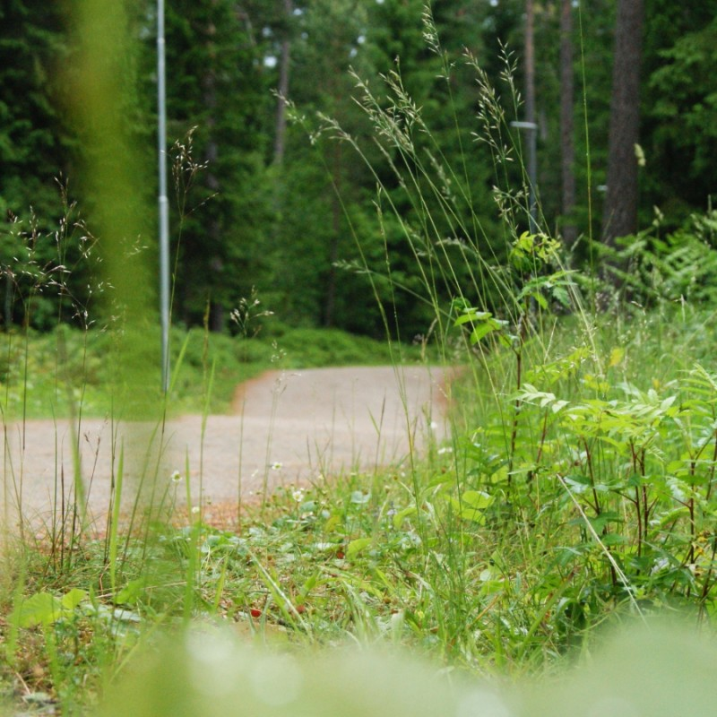 Dra till skogs