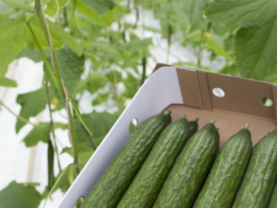 foto_komkommers.jpg