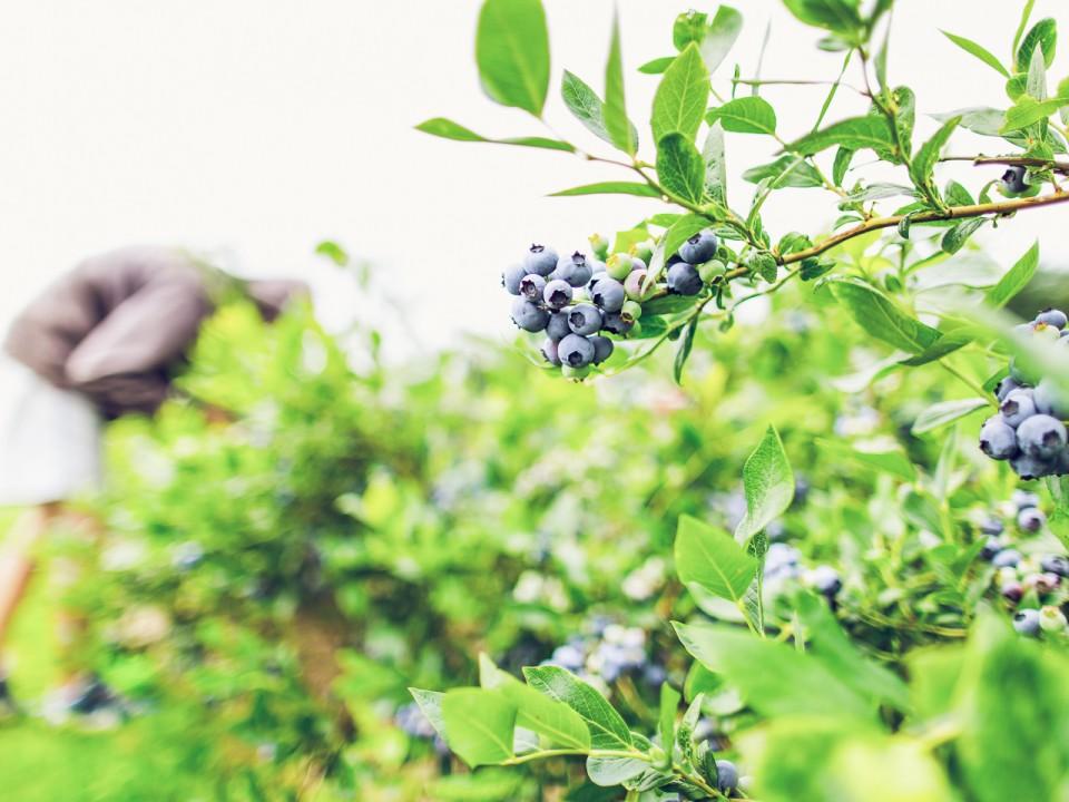 blauwe-bes-drenthe-23.jpg