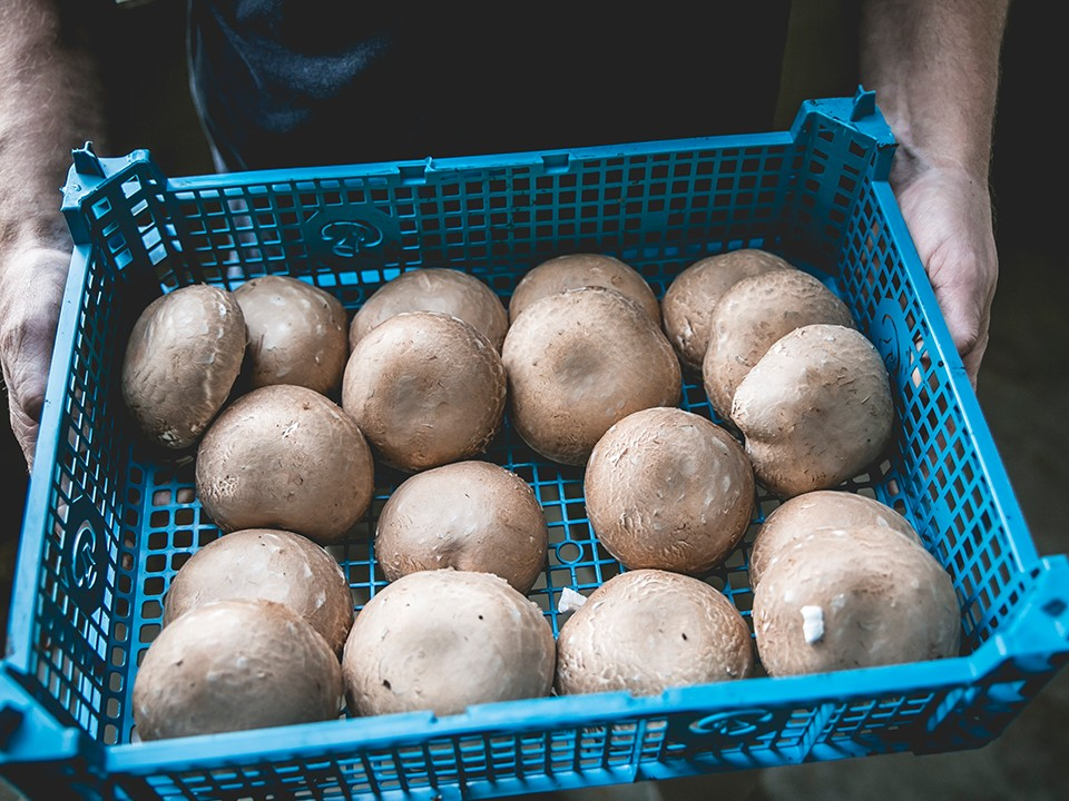 paddenstoelenkwekervandevorle6.png
