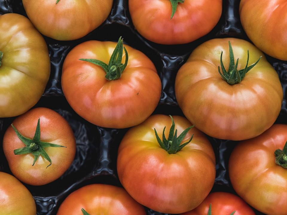 Zo blijft tomaat het langst vers!
