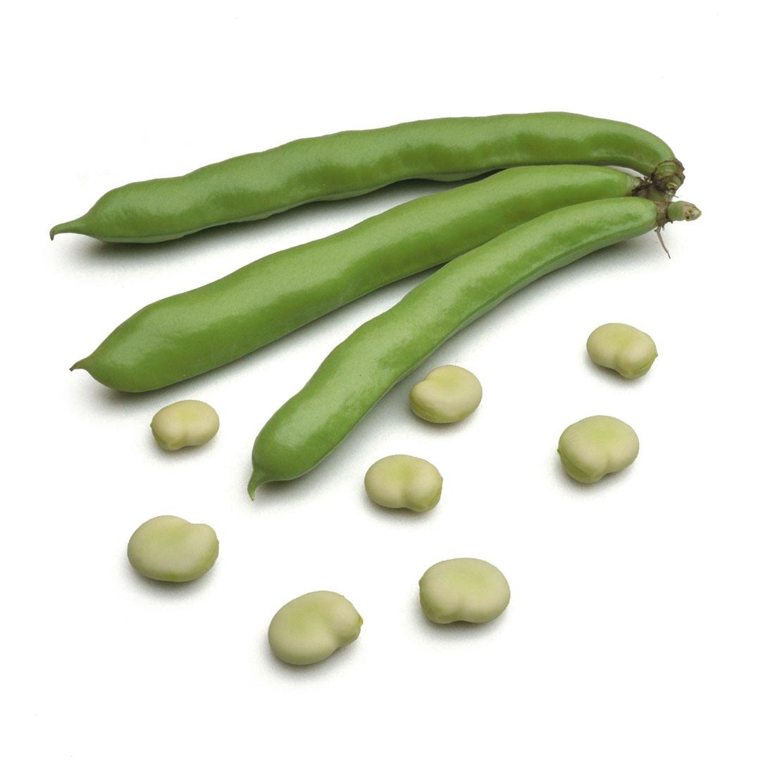 tuinbonen - verse oogst