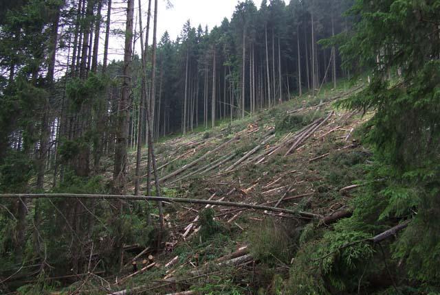 Леснику из Житомирской области дали условный срок за незаконную рубку деревьев