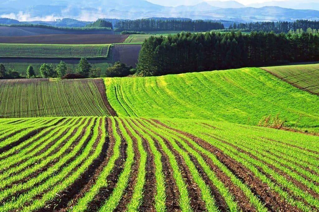 У Житомирській області ще п'ять об'єднаних територіальних громад отримали у комунальну власність земельні ділянки