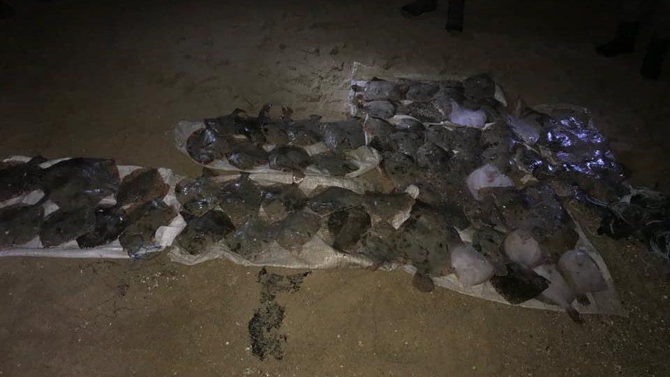 В Запорізькій області браконьєра спіймали за виловом камбали, — ФОТО