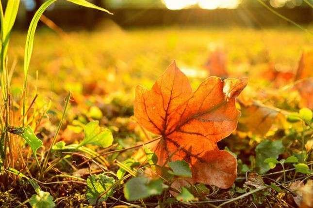 Бабине літо до +22 і дощі: прогноз погоди на 11 жовтня