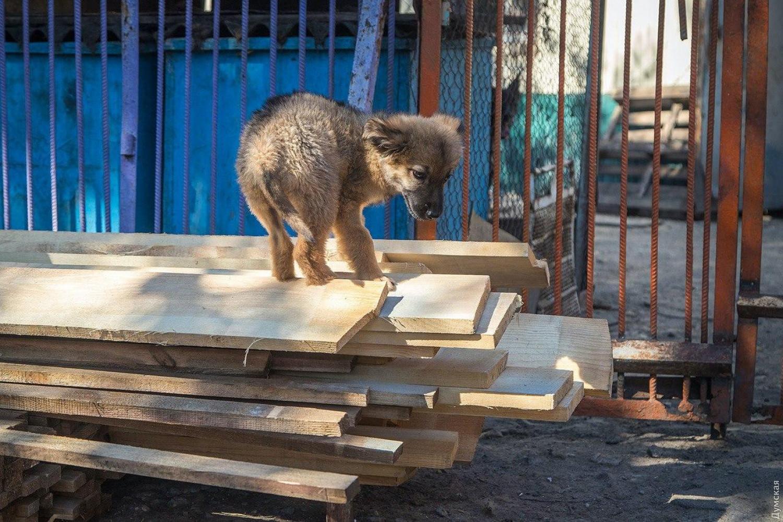 Мэрия потратит почти полтора миллиона гривен навосстановление горевшего приюта длябездомных животных