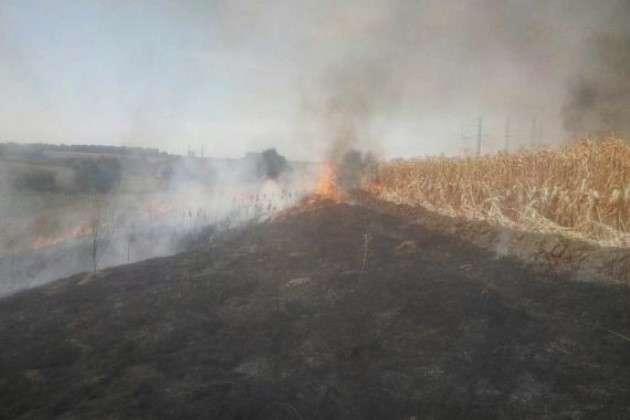 На Полтавщині палає 300 га кукурудзяного поля