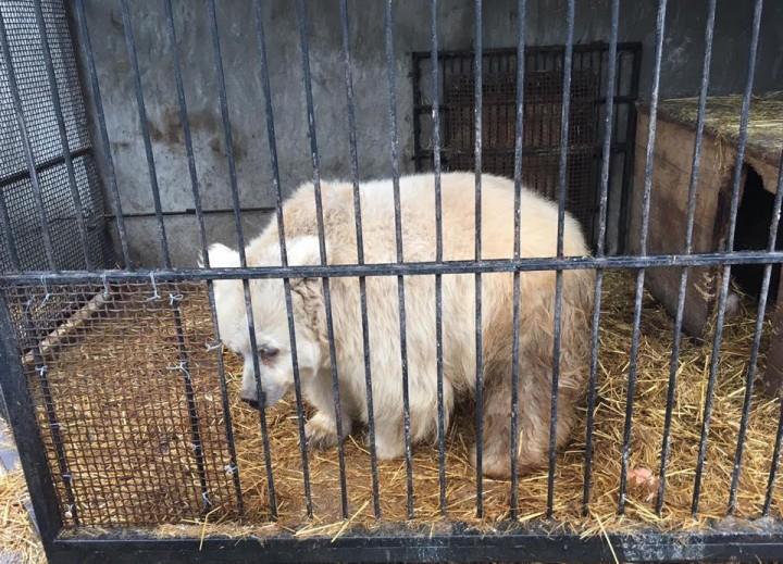 У покинутой циркачом медведицы появится собственное жилище        3 July 2019, 20:29 - post are contained