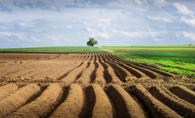 Прикарпатські депутати готують звернення на заборону продажу українських земель