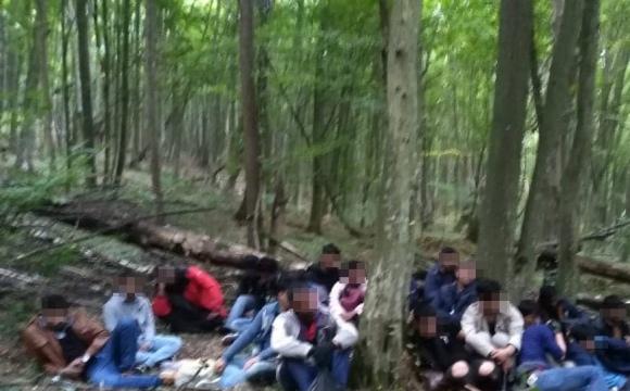 Прикордонники затримали в лісі 24 нелегали із Азії