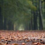 Украину накроют дожди и грозы: где ждать резкого ухудшения погоды