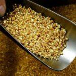 На Закарпатті відновився видобуток золота після 15-річної перерви