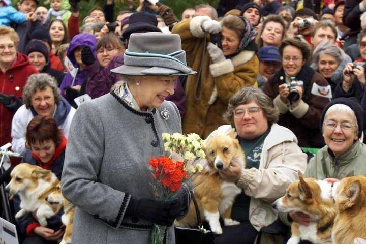 Єлизаветі II подарували двох нових коргі
