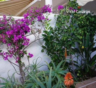 Haus / Villa – Bungalow Paraiso del Sol, Playa de Las Americas – Adeje, Adeje