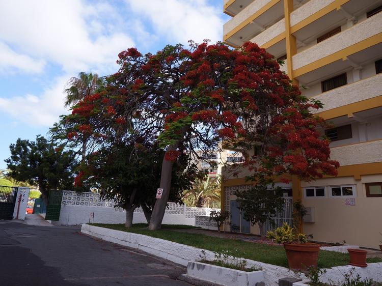 Appartamento Achacay, Los Cristianos, Arona