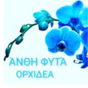 Ορχιδέα άνθη - φυτά
