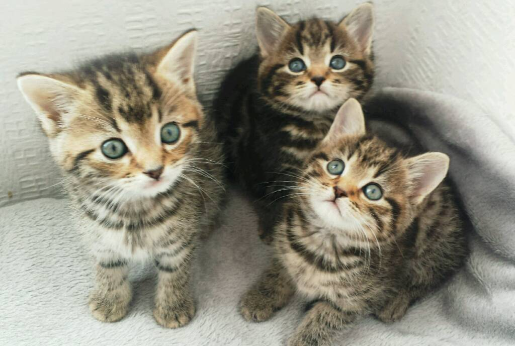🏡❤AMAZING KITTENS ready today