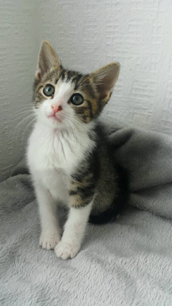 🏡❤AMAZING KITTENS ready today-image-4