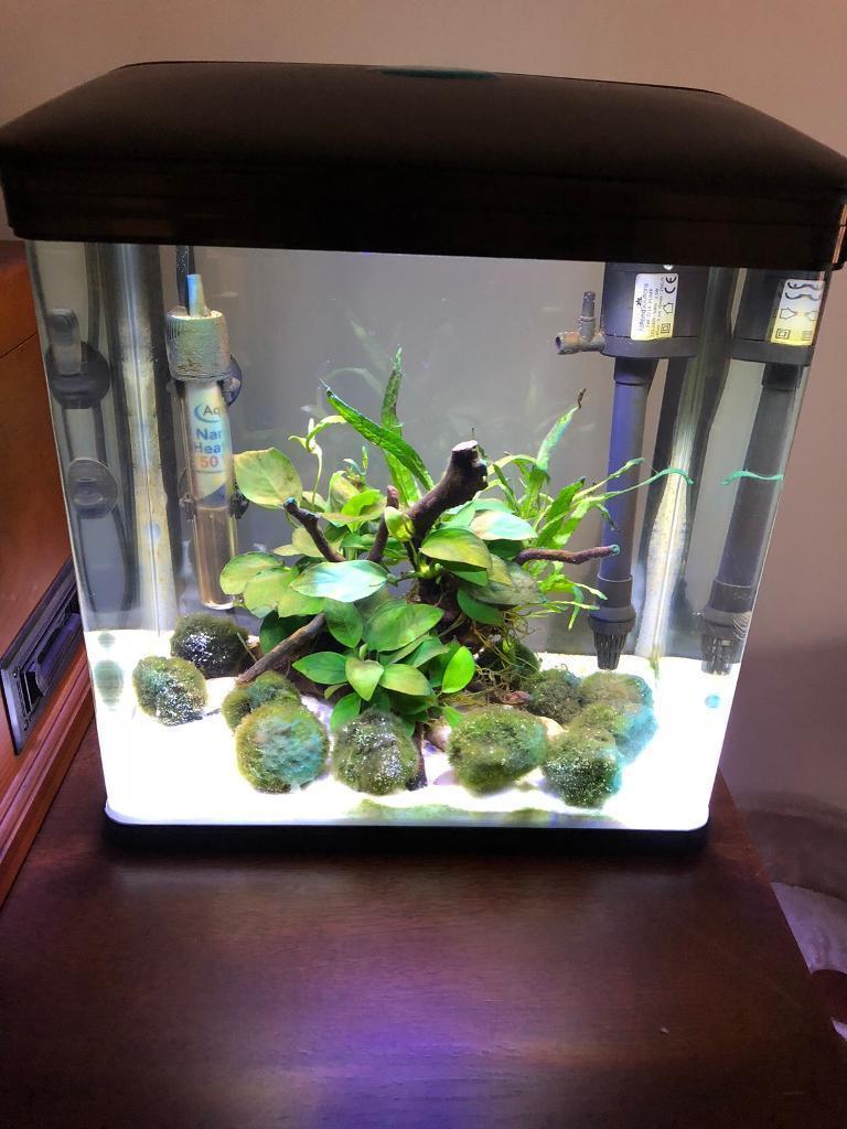 Betta fish tank-image-1