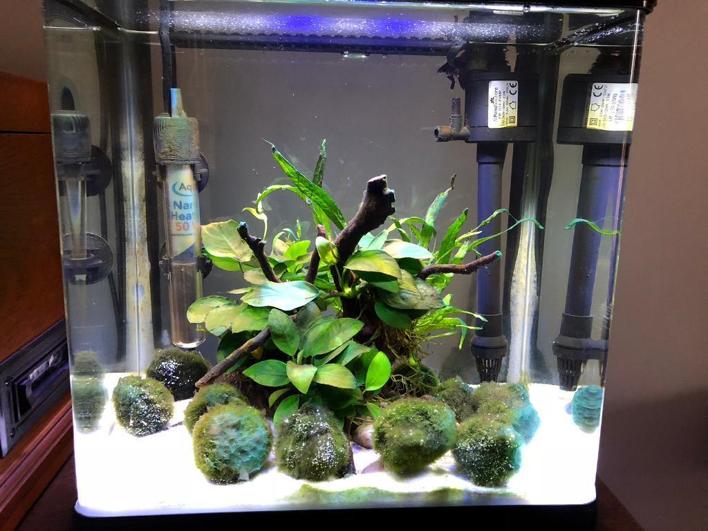 Betta fish tank-image-2