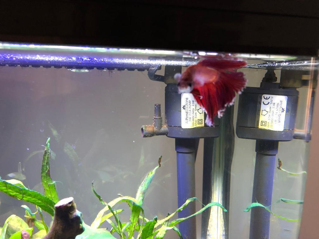 Betta fish tank-image-4