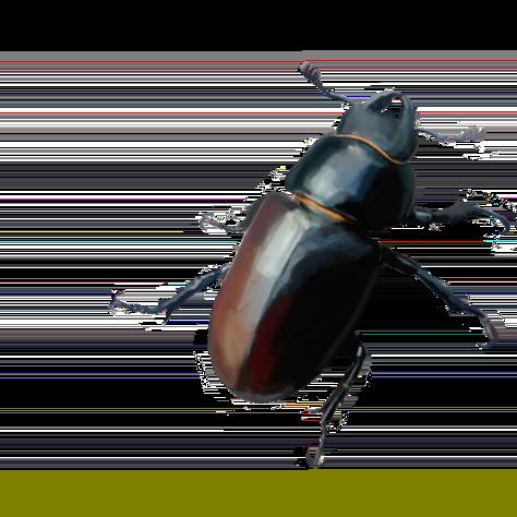 Insekti