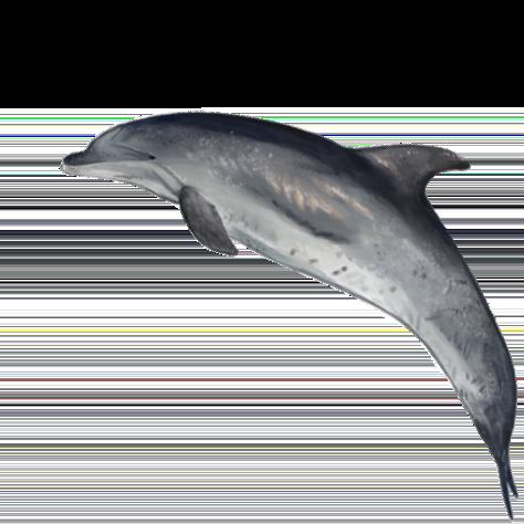Morske vrste