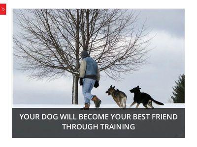Cloud Nine Dog Training School