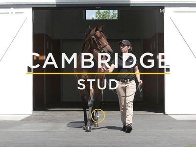 Cambridge Stud